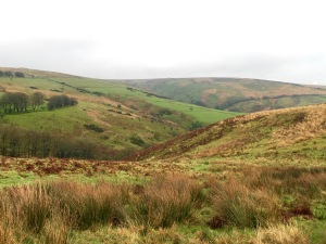 Winter colours on Exmoor