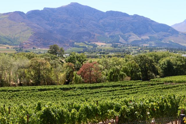 Memories of sunshine in the winelands to keep us going to the Spring