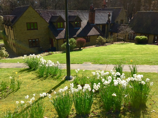 Spring daffodils at Winterfold Cottage