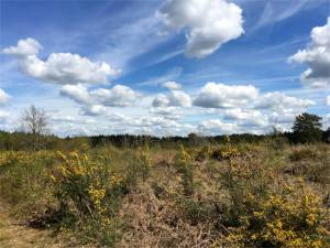 Clouds over Winterfold Heath